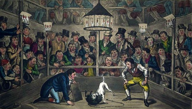 monkey cruikshank