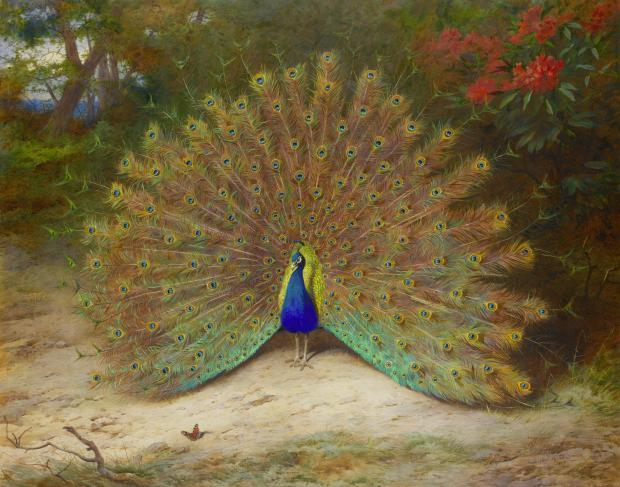 The Fascinating History Of Peacocks From The Devils Assistant To