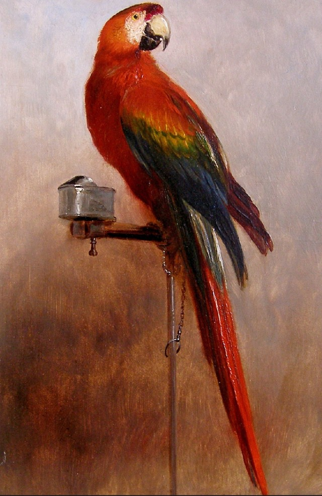 study of a parrot by george cole 1858