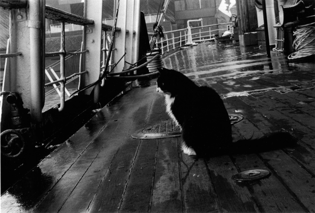 the ships cat on board the css acadia image via gregory mackenzie cc 3 0 1024x694 3ad29