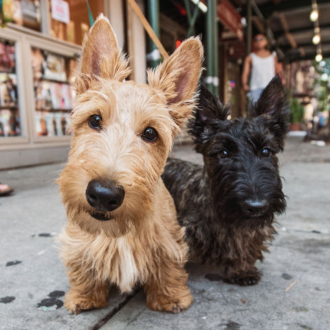 36 The Dogist Puppies dc43e