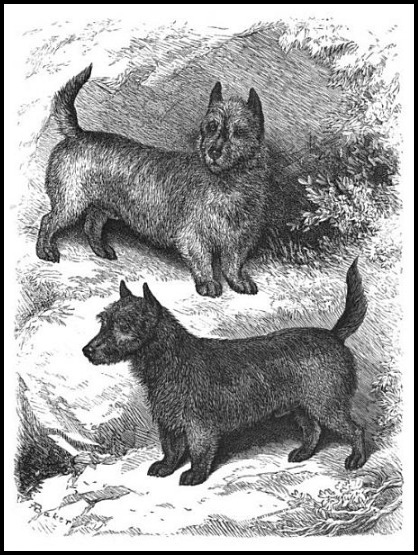 scotch terrier dogs of the british islands 1882 1 60917