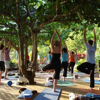 Outdoor Yoga Tree