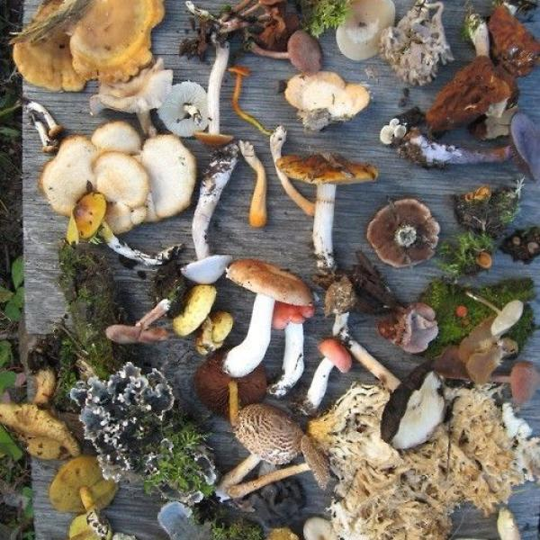 Intro to Medicinal Mushrooms with Arielle Hayat